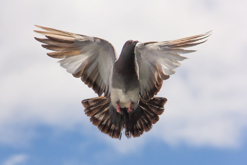 zelf een duivenhok bouwen